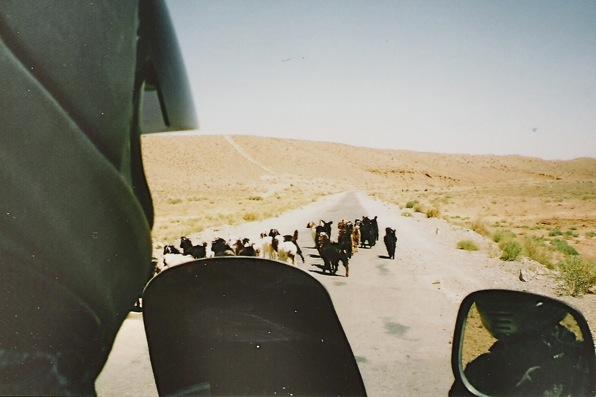 4-facingtheviciousegoatsofpakistan-2011-03-31-08-591.jpg