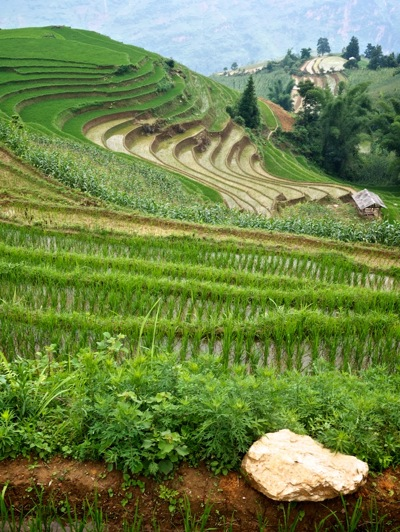 cycling past rice terraces north Vietnam